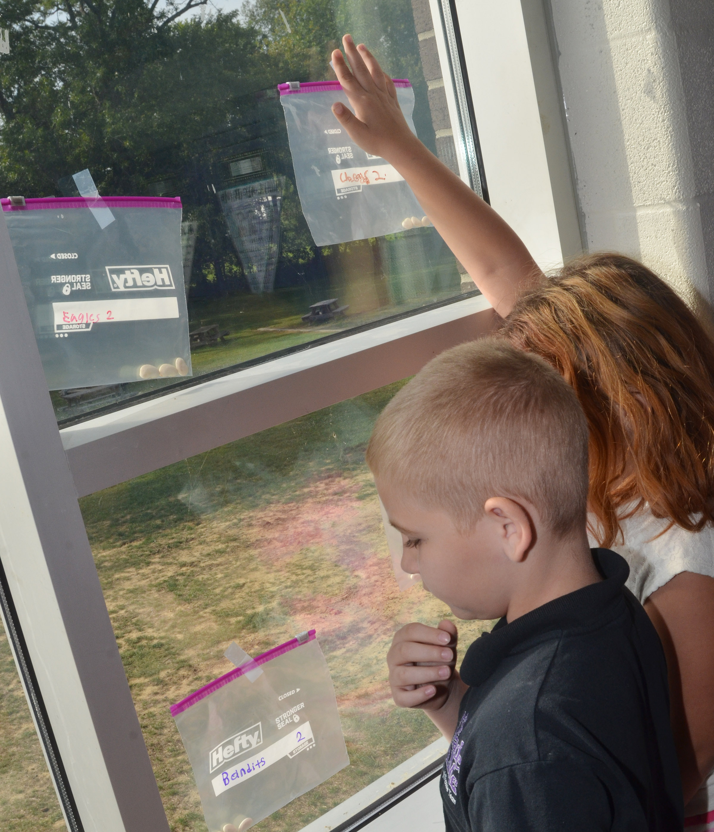 CES third-graders Joseph Greer, at left, and Angelina Babbs tape their Ziploc bags to the windows so they can grow.