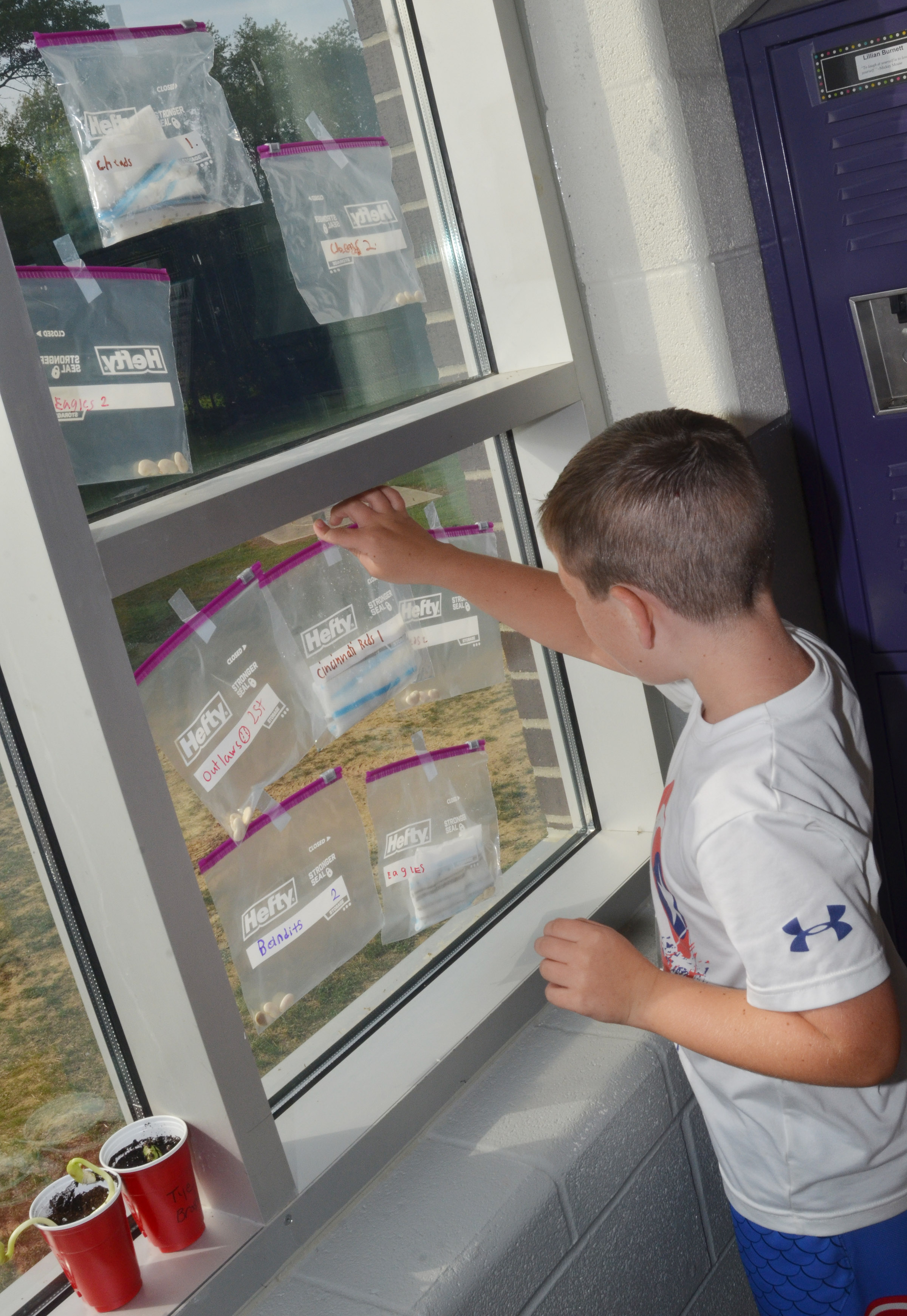 CES third-grader Luke Adkins tapes his Ziploc bag to the window so his lima bean can grow.