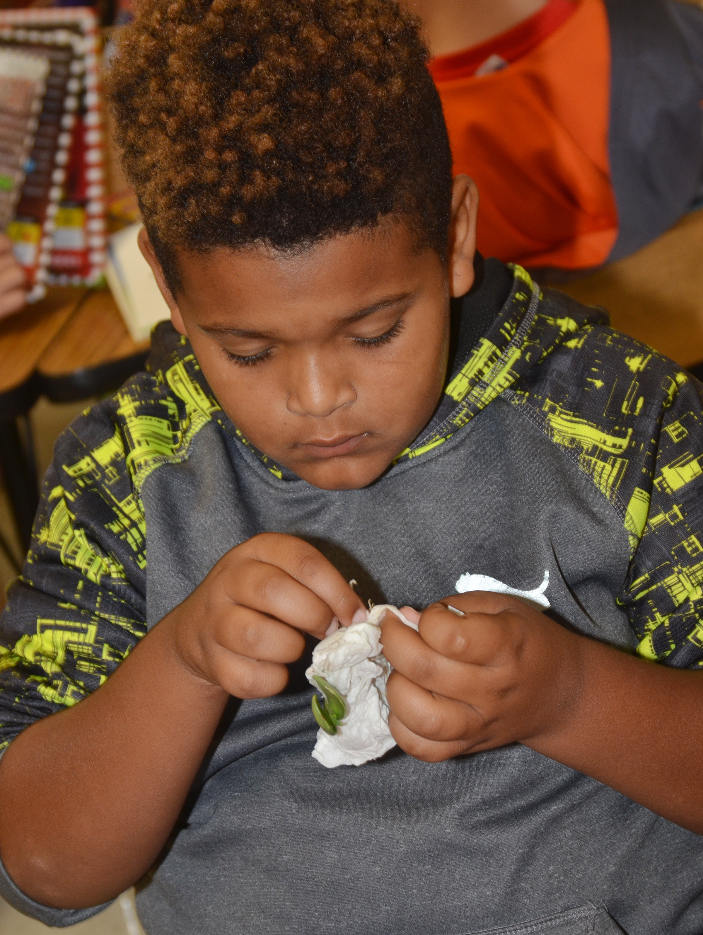 CES third-grader Jayden Moore looks at his lima bean plant.