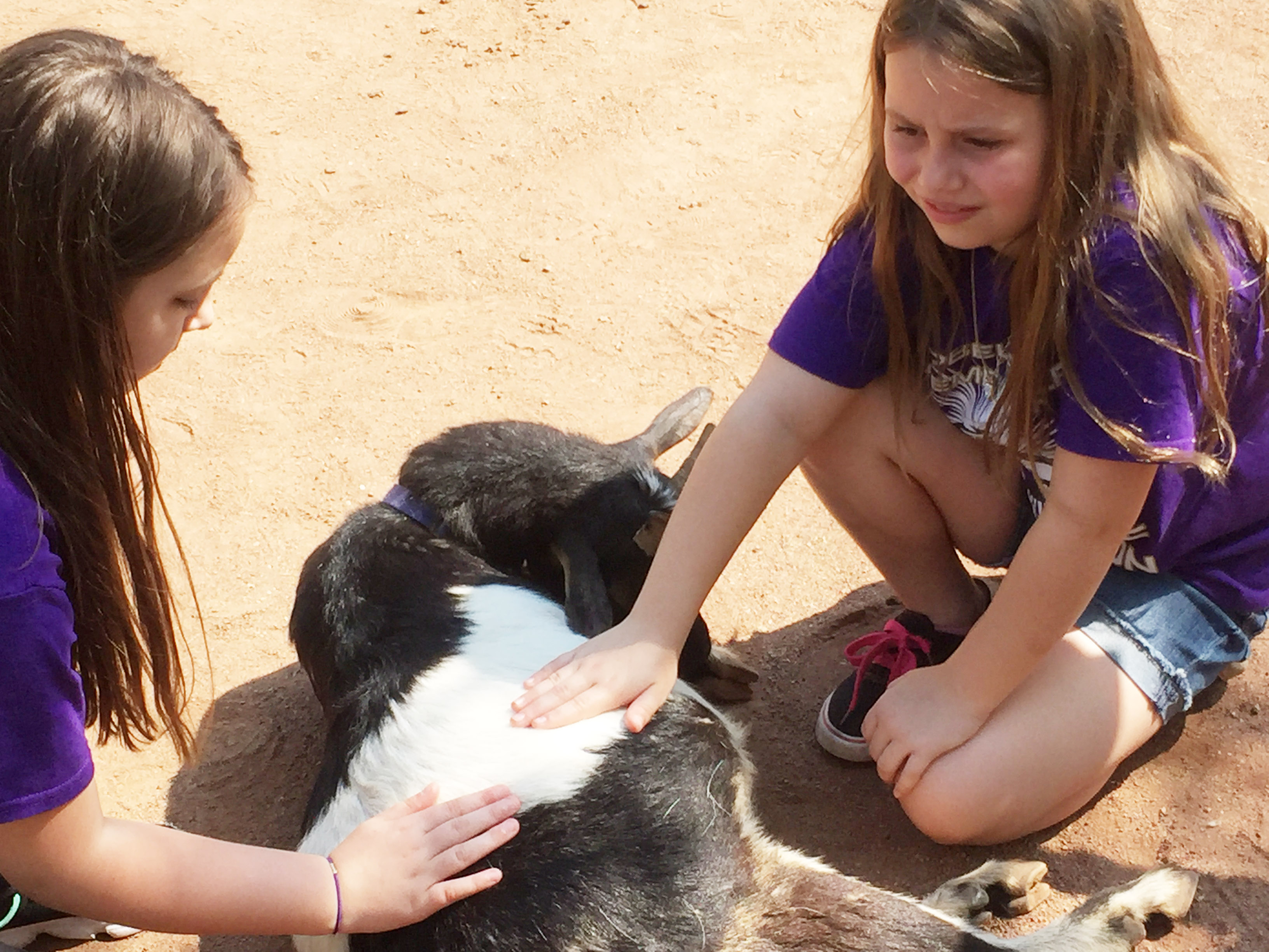 CES third-graders Alexis Roddy, at left, and McKailynn Grubaugh pet a goat.