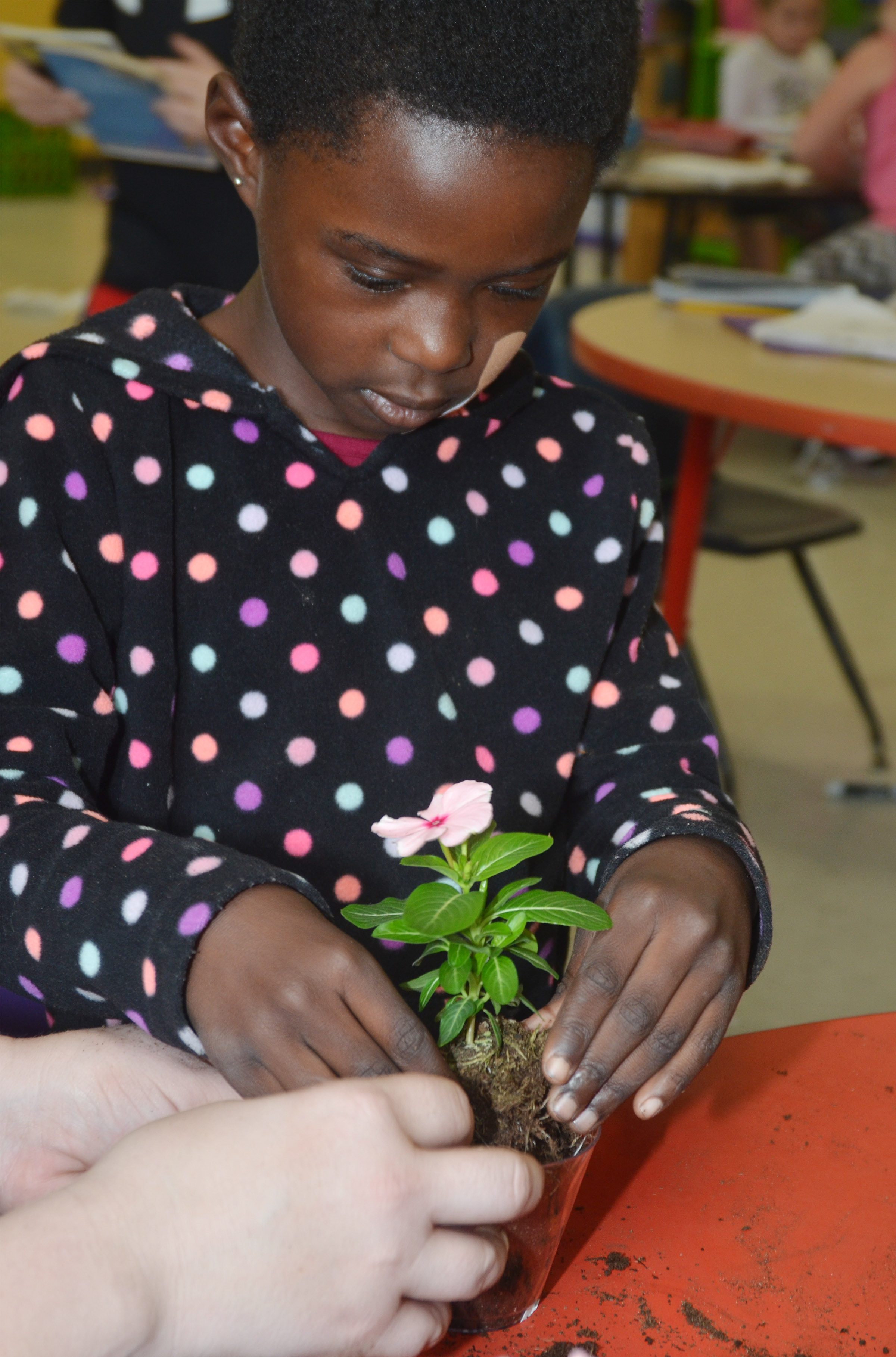 CES first-grader Zion Mitchell plants a flower for her mother.