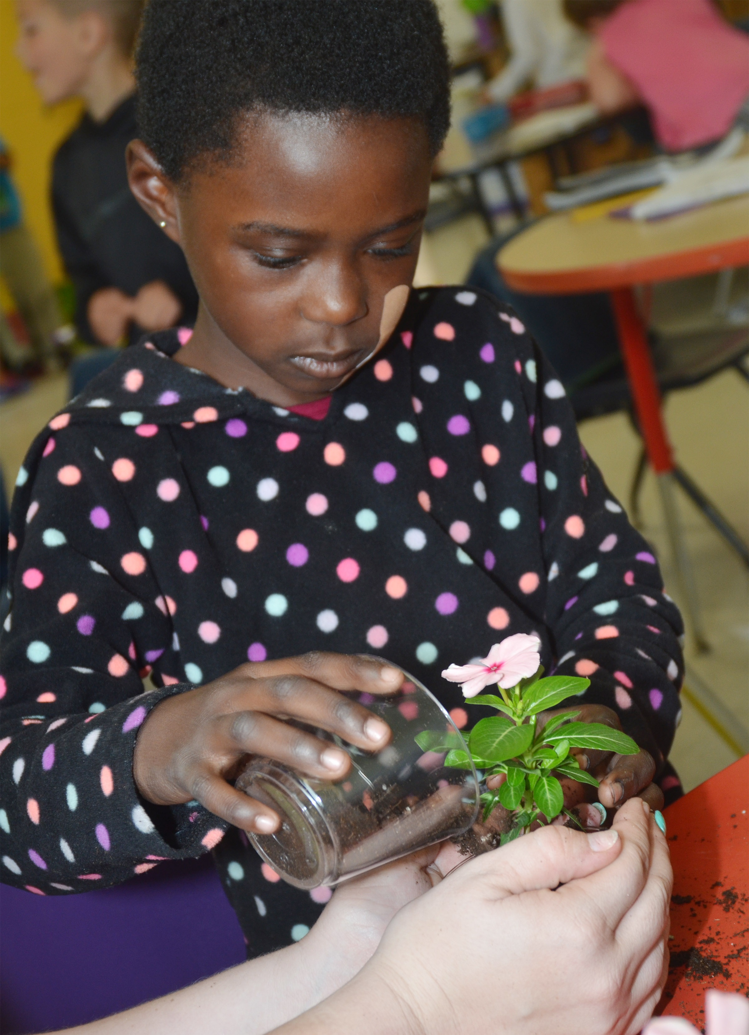 CES first-grader Zion Mitchell waters the flower she planted for her mother.