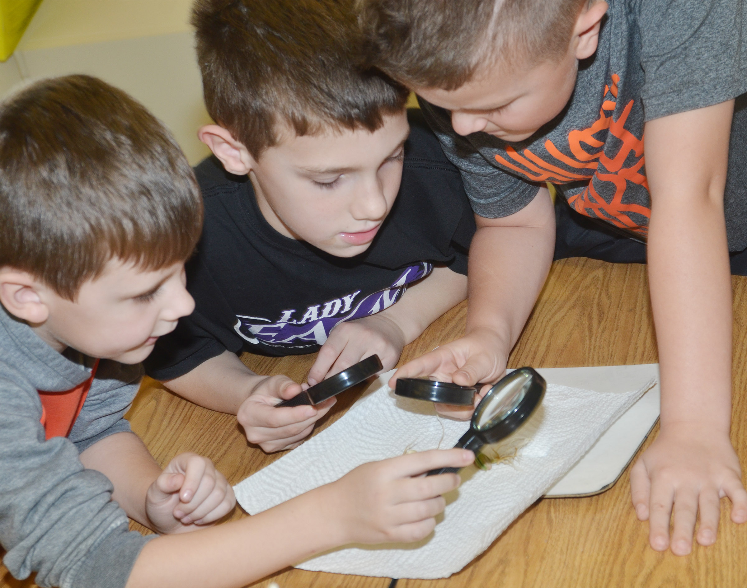 CES second-graders, from left, Ryan Tungate, Aidan Wilson and Cayton Lawhorn get an up close look at their bean plant.