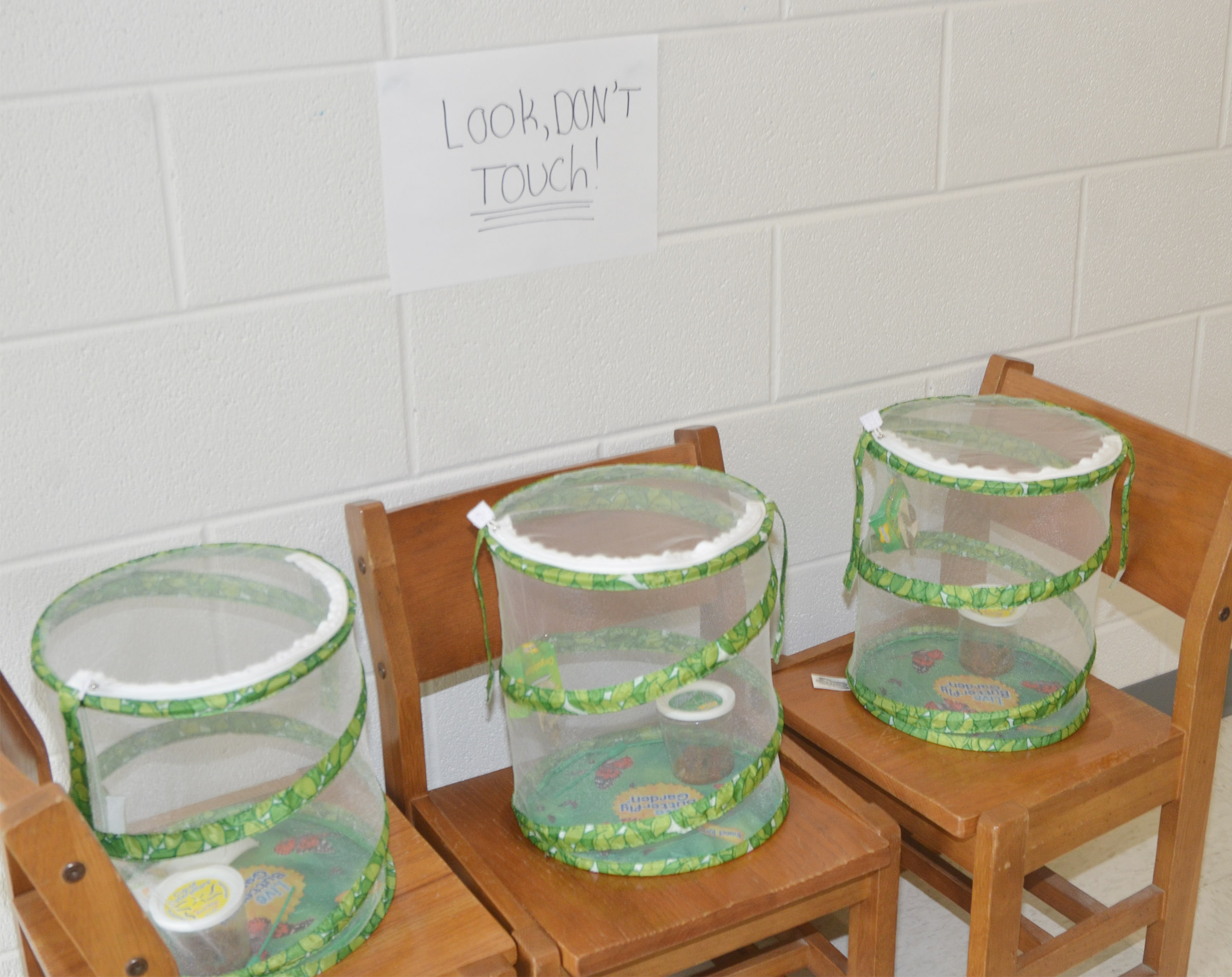 CES third-graders recently learned about the butterfly life cycle. Students cared for their own butterflies in these containers until they were ready to be released.