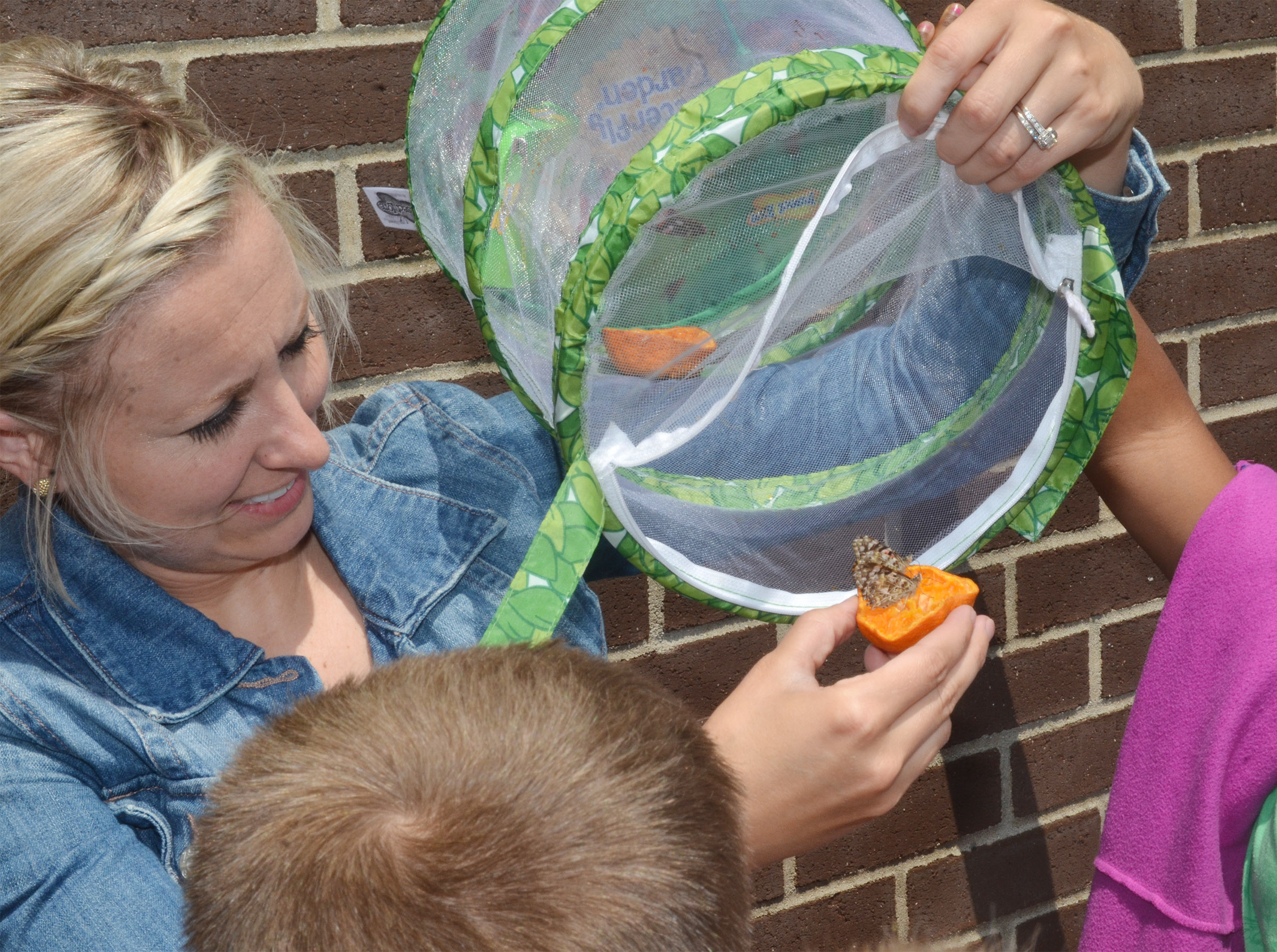 CES third-grade teacher Hannah Jones holds the container as the butterflies prepare to fly away.
