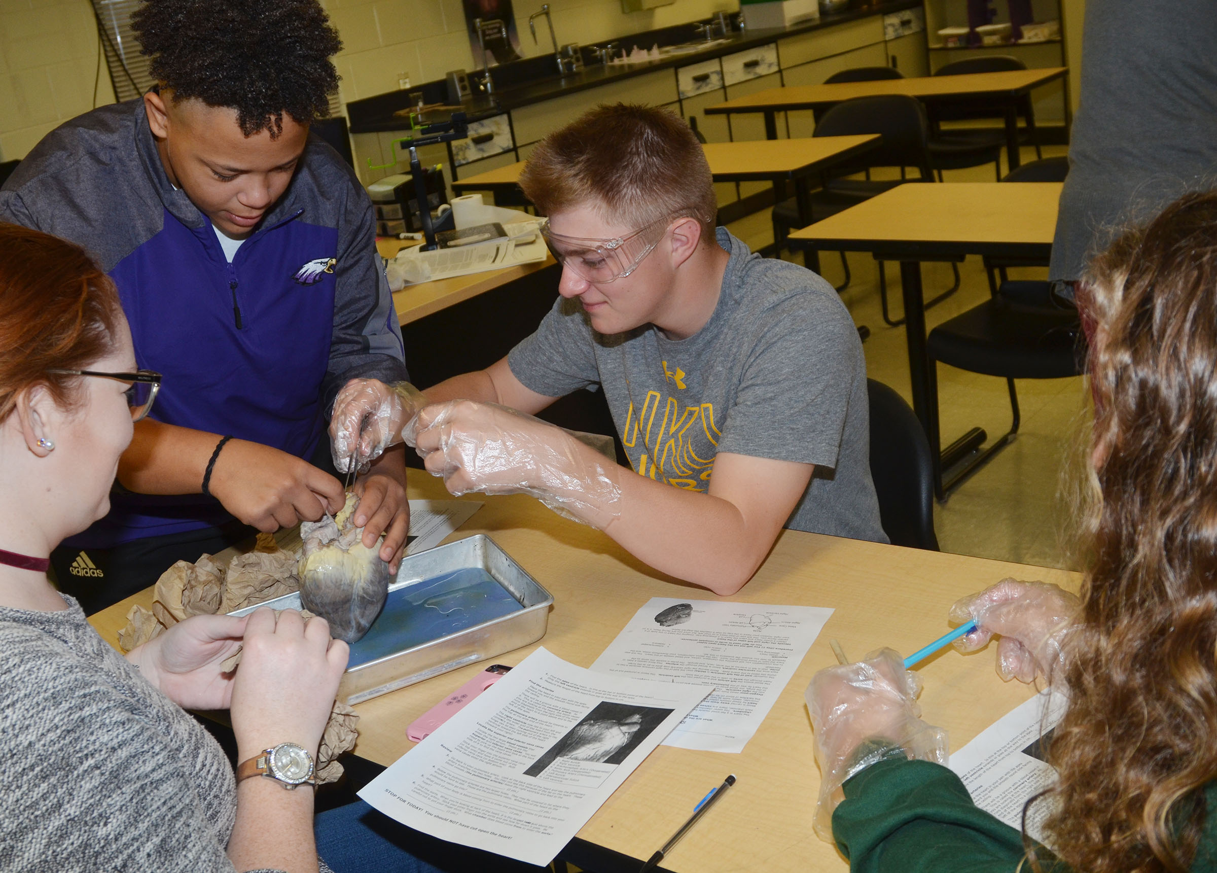 From left, CHS senior Mallory Haley, sophomore Dee Simpson, junior Alex Doss and senior Caroline McMahan dissect a sheep's heart.