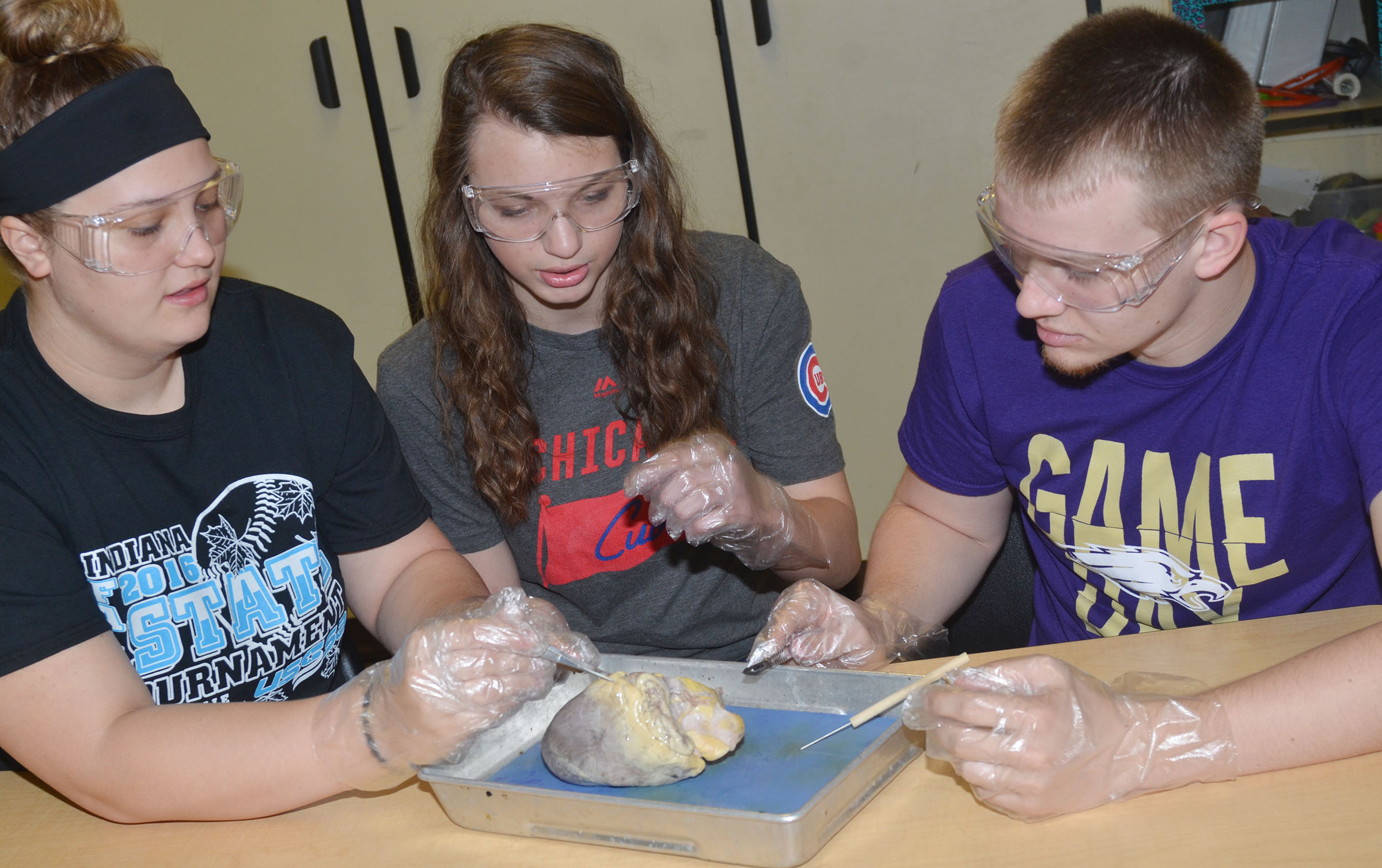 From left, CHS seniors Brenna Wethington and Caylie Blair and junior Wyatt Houk dissect a sheep's heart.
