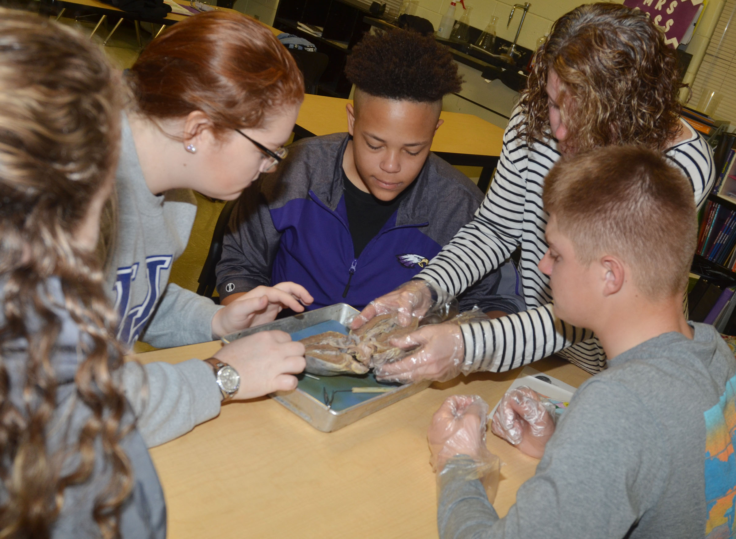 CHS anatomy teacher Dee Doss helps students, from left, seniors Caroline McMahan and Mallory Haley, sophomore Dee Simpson and junior Alex Doss identify the parts of the heart.