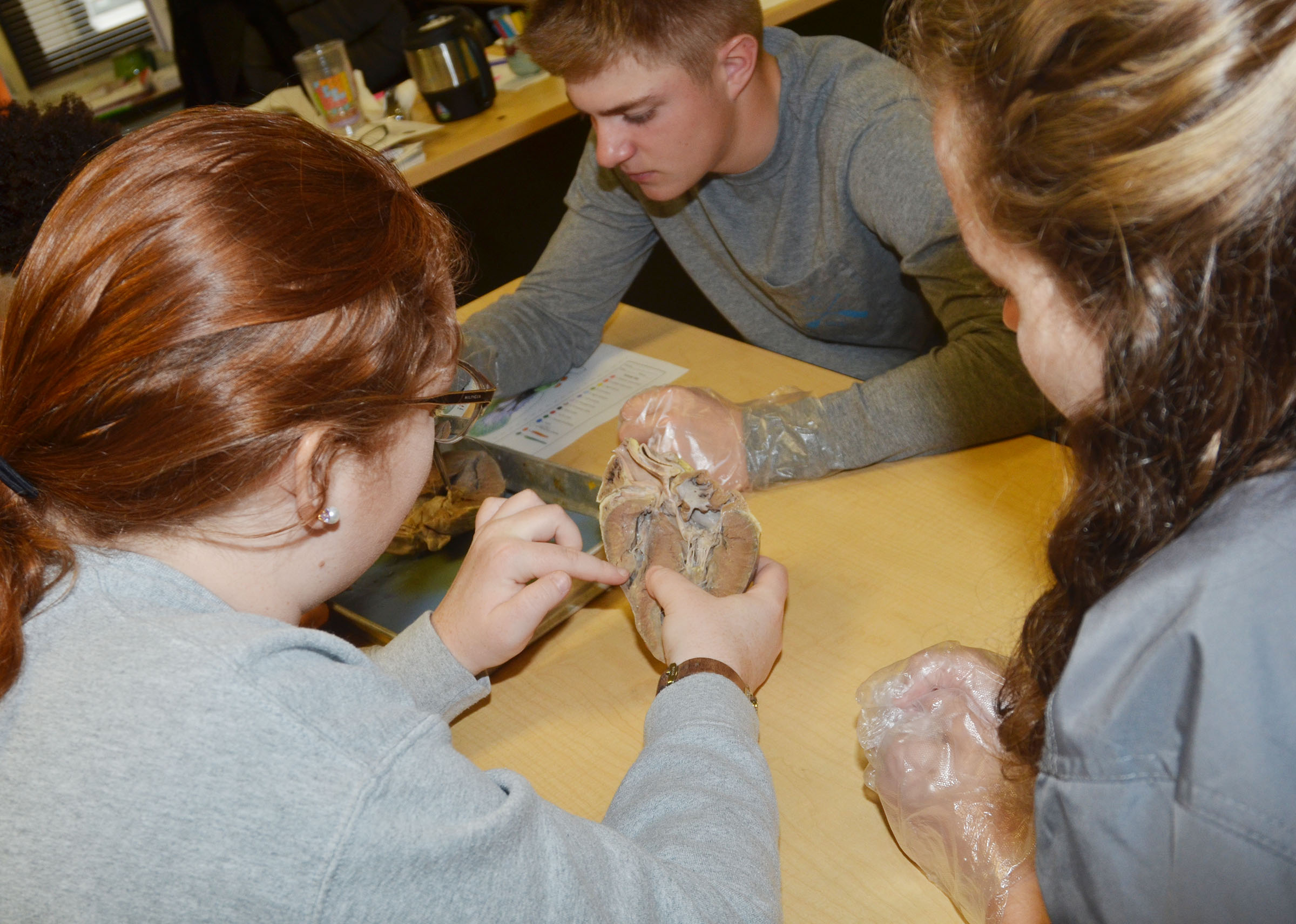 CHS seniors Mallory Haley, at left, and Caroline McMahan work with junior Alex Doss to identify the parts of the heart.