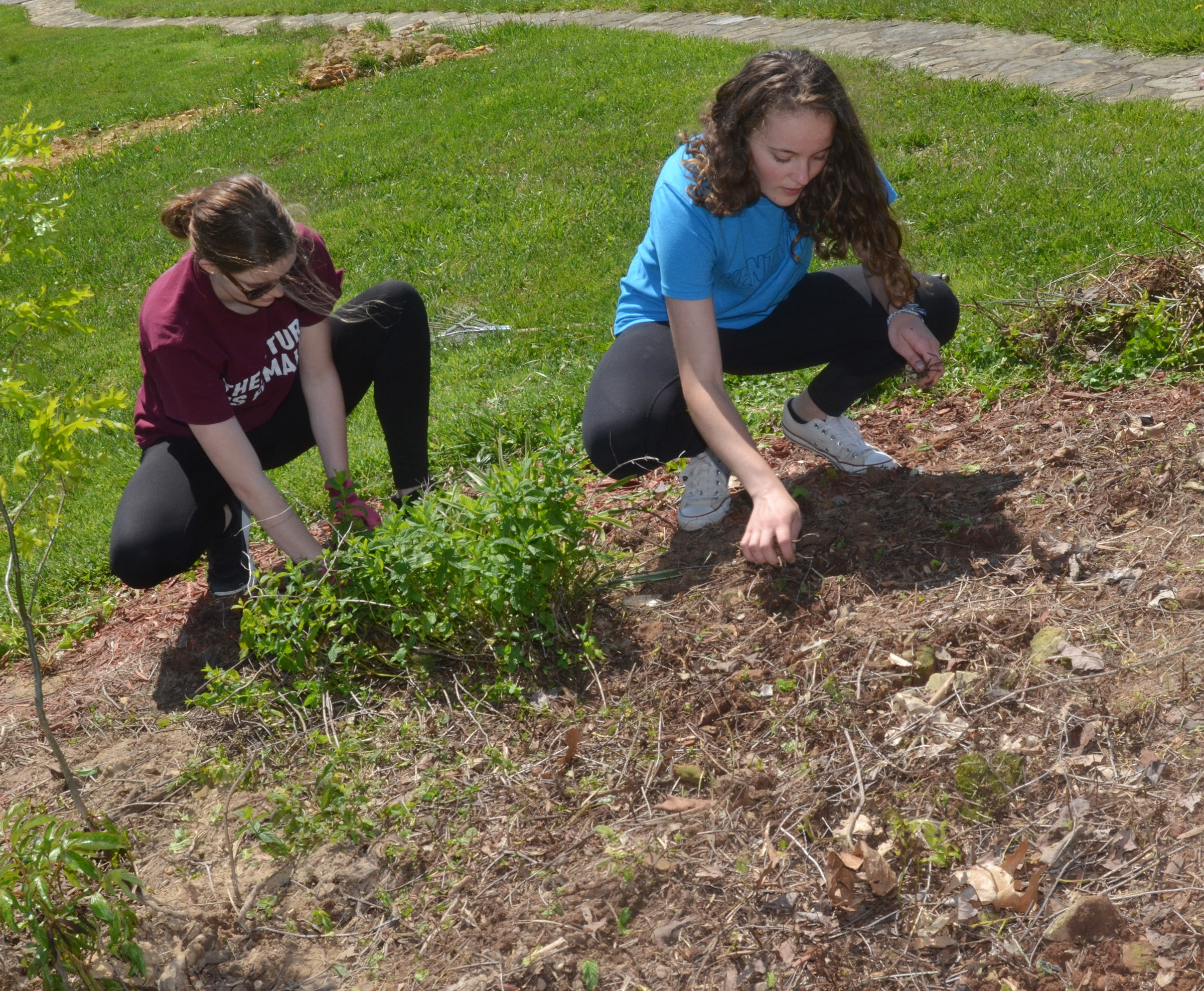 CHS seniors Blair Lamb, at left, and Caroline McMahan pull weeds at Miller Park.