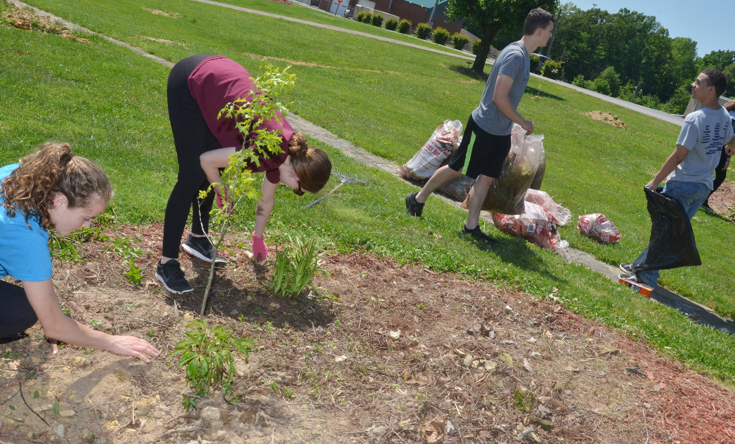 From left, CHS seniors Caroline McMahan, Blair Lamb, Jonathan Rakes and Michael Porter do some landscaping at Miller Park.